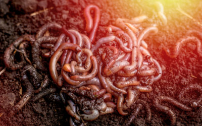 Squiggly Wiggly Worms